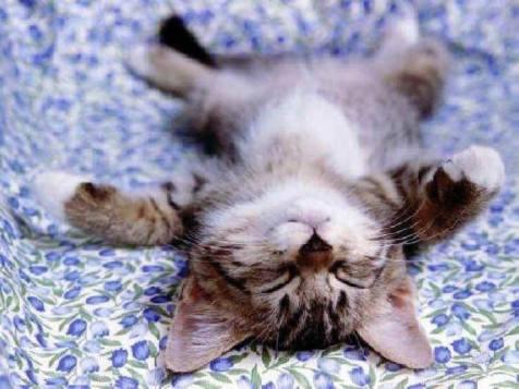 yoga napping
